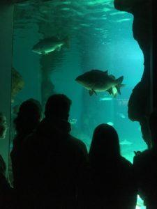 En el acuario 1